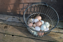 Farm Fresh Eggs With Multicolored Egg Shells In Wire Basket Next To A Barn Door
