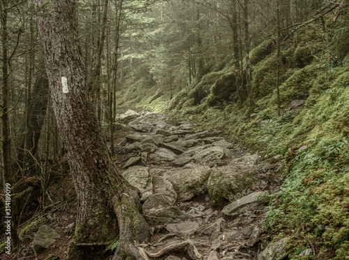 Fotografiet Muted Colors of Mossy Appalachian Trail