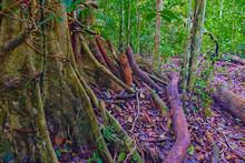 Rotting Process Beside Wet Tree Roots. Inside Khao Yai National Park (part 5)