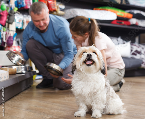 Photo Portrait of dog in pet store
