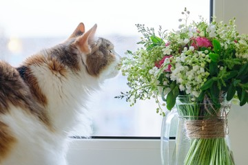 Adult tricolor domestic cat sitting on windowsill with bouquet of spring flowers