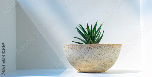 Potted plant against light and shadow background Tablou Canvas