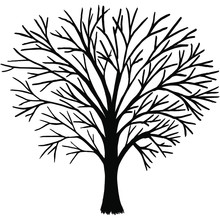 Ebony Without Leaves, Bare Branches. A Tree With Branches Without Leaves.