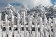 Wooden Fence In Frost On The W...