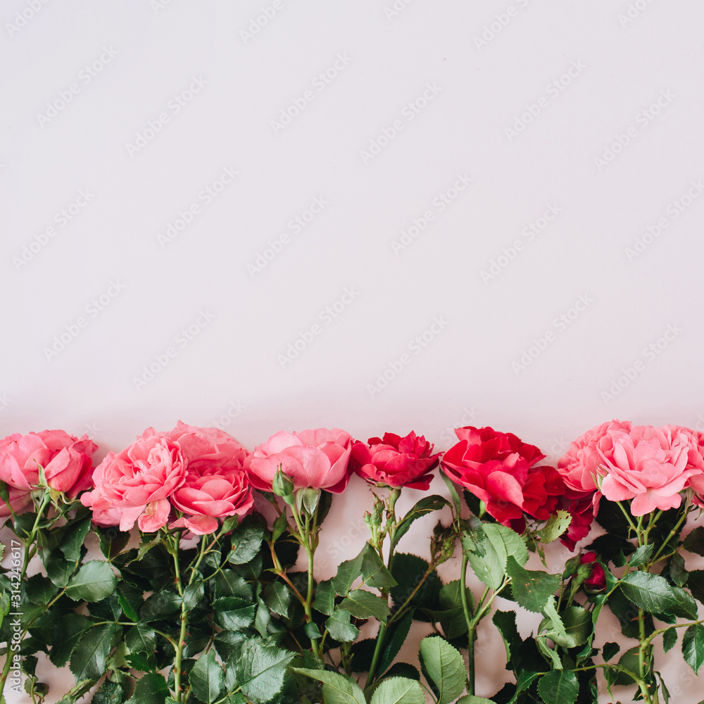 Fototapeta Pink and red roses flowers on pink background. Flat lay, top view minimal floral hero header. Valentine's day composition.