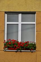 Red Pelargonium Flowers On The Window.