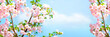 Leinwandbild Motiv Branches blossoming cherry on background blue sky and white clouds in spring on nature outdoors. Pink sakura flowers, amazing colorful dreamy romantic artistic image spring nature, banner format.