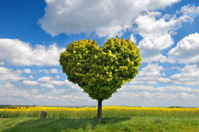 Grüner Baum In Herzform Auf E...