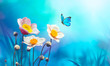 Leinwanddruck Bild - Beautiful pink flowers anemones fresh spring morning on nature and flying blue butterfly on soft blue background, macro. Amazing artistic elegant image of spring nature.