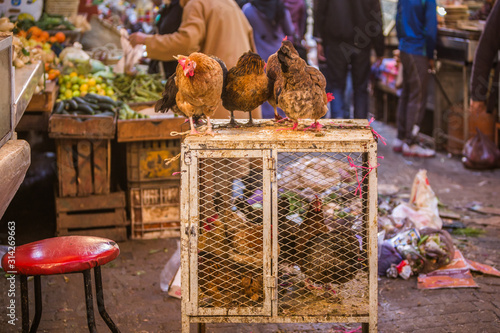 Hens, roosters and chicken sold in the shop of a merchant in the souk of the medina of Fes in Morocco