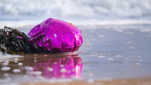 Party Balloon Tangled In Seawe...