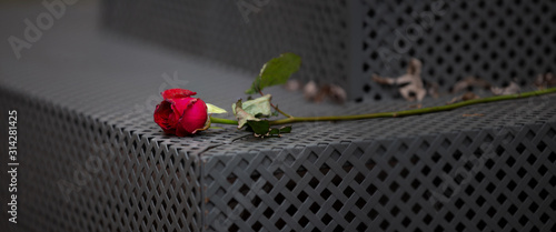 romantic withered red rose abandoned on bench