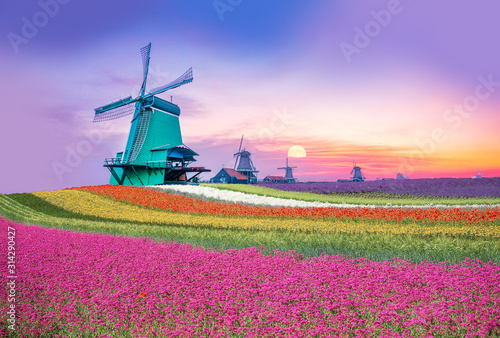 Dutch countryside with sea of flower bloom and wind mills