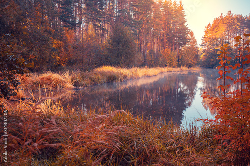 Fotografie, Obraz  Overgrown with the sedge shore of the forest lake