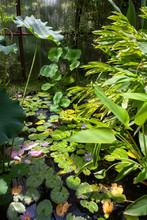Plantes Aquatiques Dans Une Serre Tropicale