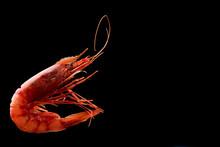 King Tiger Red Prawn Shrimp Mazara Isolated On Dark Background