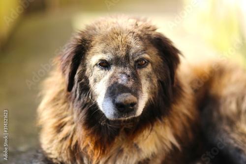Photo Old age abandoned street stray dog