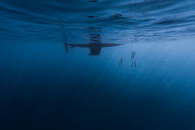 Couple Freedive Along The Anch...