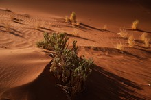 Growth In The Desert
