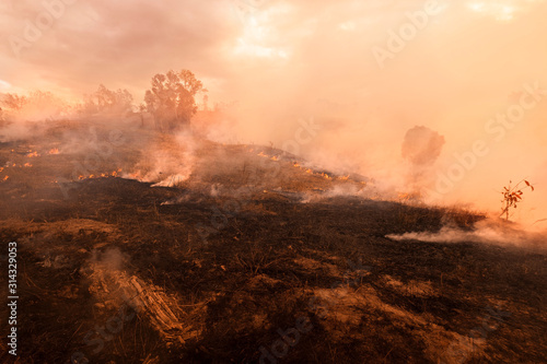 Photo Bush fire, Burned black land on hill in Australia