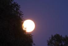 Full Moon Rises And Shines Thr...