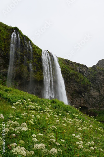 200 Foot waterfall in Iceland just Behind the winter flowers and shrubs