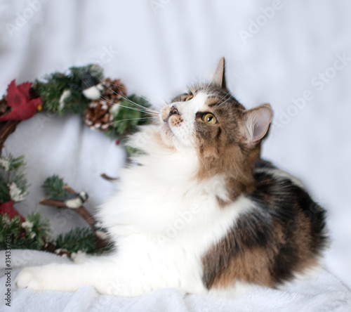 Cat with Christmas Wreath