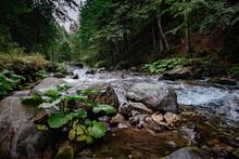 Mountain Stream In High Tatras National Park, Poland