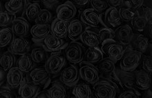 Beautiful Black Roses. Floral ...