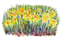 Daffodils, Abstract Floral Ill...