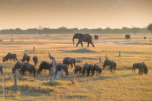 sunset in Hwang national parc, Zimbabwe Wallpaper Mural
