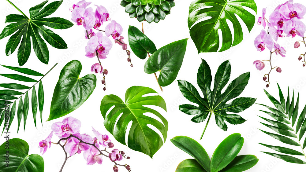 Fototapeta Orchid flowers and tropical green leaves background