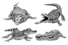 Graphical Set Of Crocodiles  I...