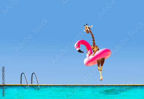 Photo Giraffe jumping into pool with inflatable flamingo