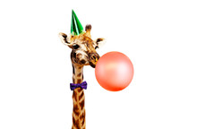 Giraffe Blow Air Balloon Birth...