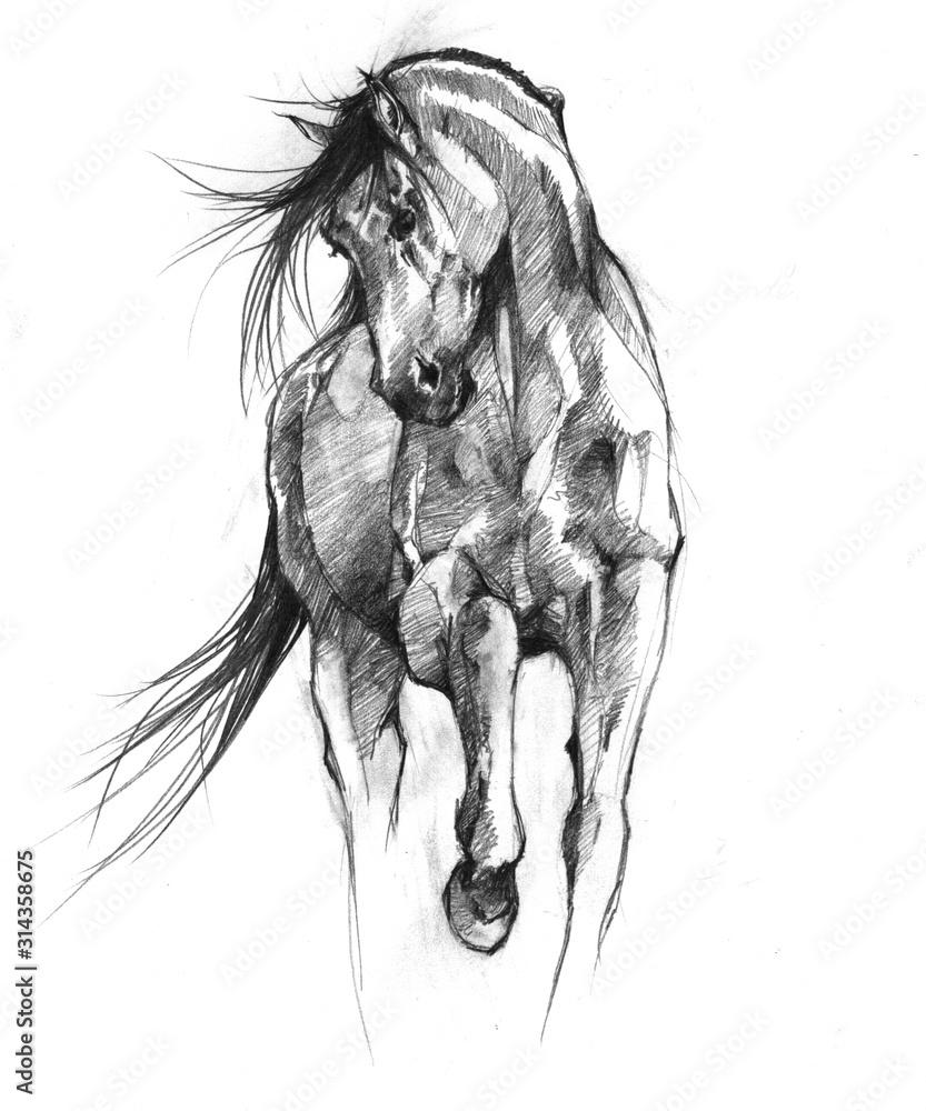 Fototapeta Horse Sketch