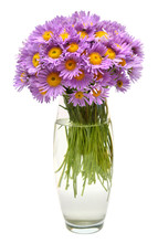 Bouquet Of Flowers Asters Alpine Perennial Pink In Vase Isolated On White Background. Floral Pattern, Object. Flat Lay, Top View. Still Life