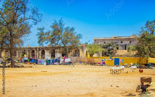 фотография Herd of goats on a typical dusty yard in Goree, Senegal