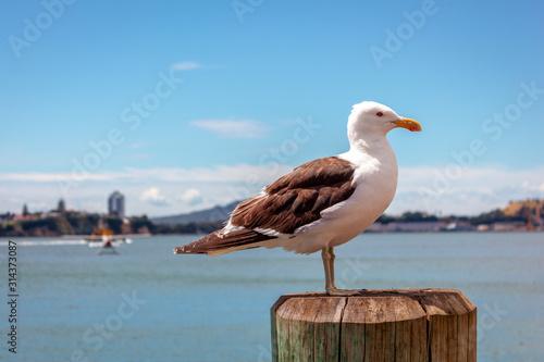 Fototapeta Albatross bird against the horizon and blue sky