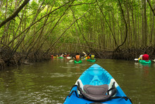 Group Of Tourists Kayaking In The Mangrove Jungle Of Krabi, Thailand