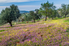 Landscape Near Ajloun Town, Jordan.