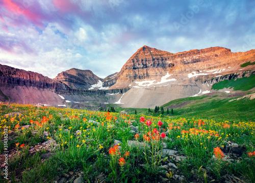 Summer wildflower dawn with Mount Timpanogos, Utah, USA. Wallpaper Mural