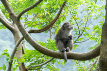 Monkey Eating On A Tree