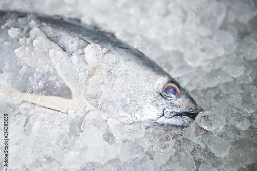 Raw fish seafood on ice background , Longtail tuna , Eastern little tuna fish - Canvas Print