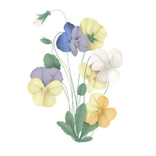 Colorful Pansy Flowers With Le...