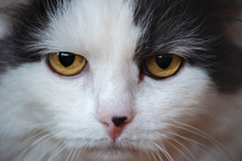 Close-up Portrait Of Indiffere...