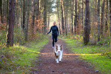 Woman Jogging In Forest With H...