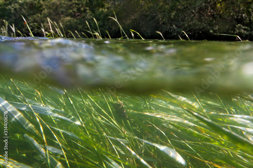 Obraz na plátně outdoor, green, drava, river, floodplain, nature, sedge, reed, flood forest, sid