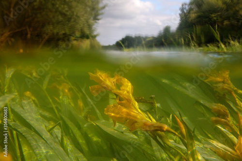 Fototapeta outdoor, green, drava, river, floodplain, nature, sedge, reed, flood forest, sid