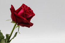 Red Rose Isolated On White Bac...